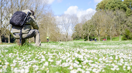 dora: Italy, Rome, Villa Dora Pamphili - 06 March 2016: Photographing among the daisies scattered throughout the park is a wonderful feeling Stock Photo