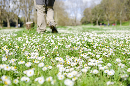throughout: Italy, Rome, Villa Dora Pamphili - 06 March 2016: Walking among the daisies scattered throughout the park is a wonderful feeling