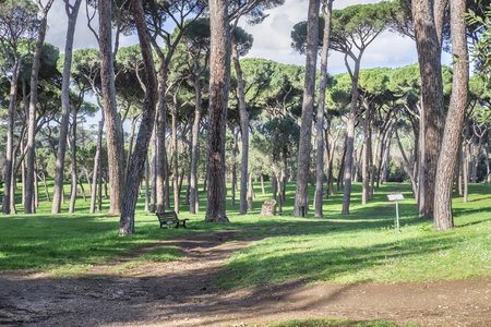 regina: Italy, Rome, Villa Dora Pamphili - 06 March 2016: Its morning in the park of Villa Doria Pamphili, the largest park in Rome; It is a place where you can walk, run, ride a bicycle and of course relax