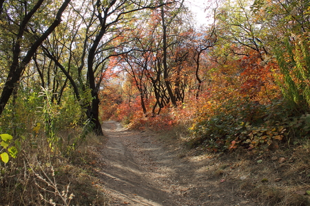 tract: Autumn in The Tunnel Girder tract in Dnipropetrovsk, Ukraine