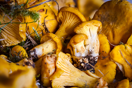 sudtirol: Mushrooms from the woods of Val Marebbe, Sudtirol, Westerrn Alps Stock Photo