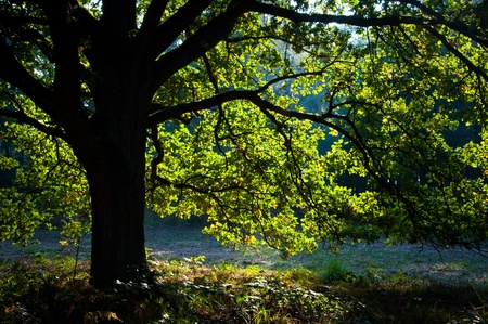 Light in a green tree in the forest
