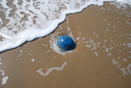 Blue jellyfish on a sandy beach