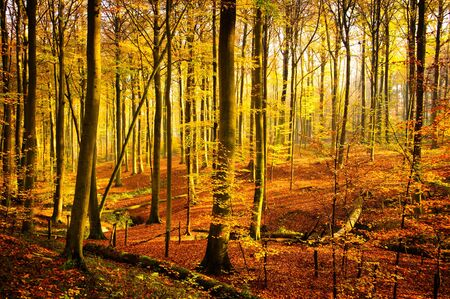 Autumn in Brakelbos, a forest in Flanders