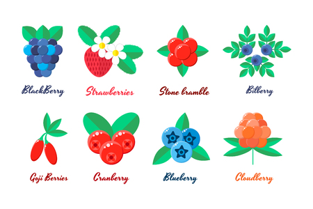 chicouté: vector illustration. set berries. strawberries, blueberries, blueberries, blackberries Goji berry stone bramble bilberry cloudberry Illustration