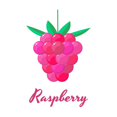 vector illustration. Raspberry Forest garden sweet berries