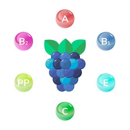 usefulness: vector illustration of wild forest berries, BlackBerry. vitamins