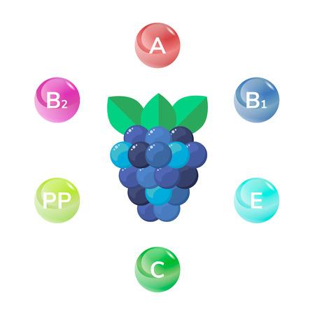 vector illustration of wild forest berries, BlackBerry. vitamins