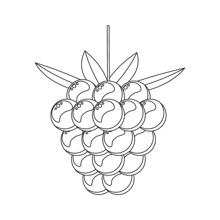 Coloring book for children. vector illustration. Raspberry Forest garden sweet berries