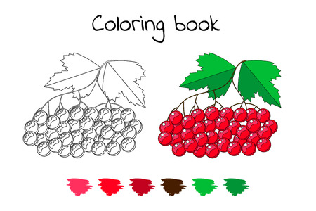 Coloring book for children. Vector illustration. viburnum berries with leaves.