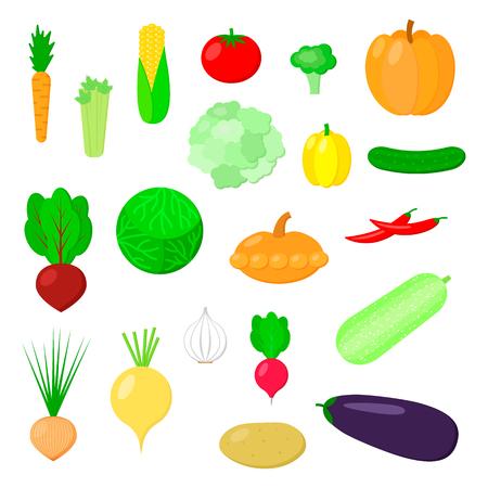 Vector illustration. Set of vegetables. cauliflower, pumpkin, head of cabbage, squash, corn, potato, chili pepper, turnip, patisson, celery, garlic, broccoli, tomato, cucumber, eggplant and paprika.