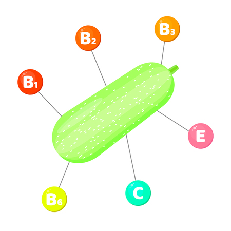 Vector illustration. Infographics. vitamins contained in vegetables. trace elements in colored circles. Squash