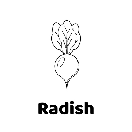 Vector illustration. Game for children. Vegetable. Coloring page radish