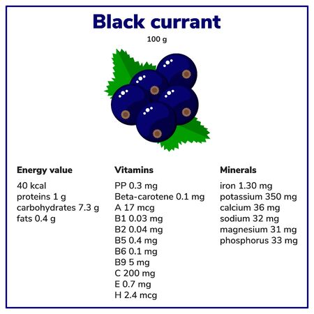 illustration. Black currant. Garden berries. Energy value, vitamins and minerals