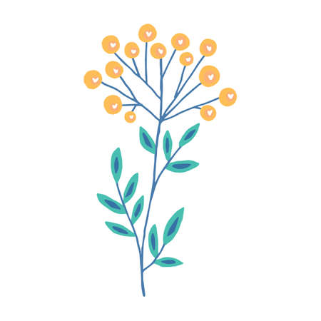 Vector illustration. Cute plant with yellow flowers. Tansy isolated on white background.