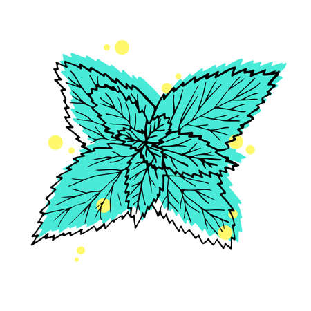 illustration. Hand drawn leaves mint. Black line with green and yellow on white background.
