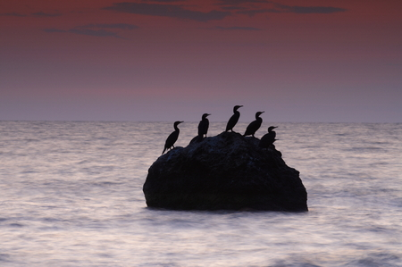 Colorful summer seascape. rocky island with birds at sunset