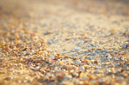 Natural sand and shells background Stock Photo