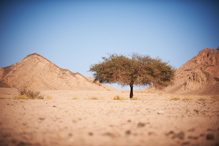 Valley in the desert with an acacia tree with mountains
