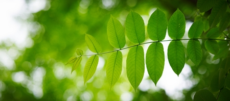 Green leaves with bokeh background