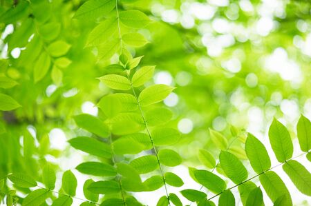 green leaves with