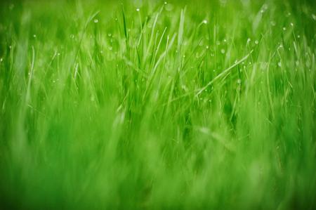 Fresh green grass , selective focus