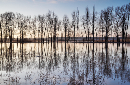 Trees standing in water during a spring high water Stock Photo