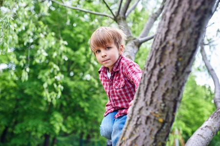 Outdoors portrait of cute preschool boy climbing a tree.