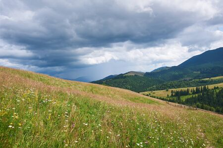 Mountain landscape with grass and flowers in the foreground. Sunny day. Carpathians, Ukraine.