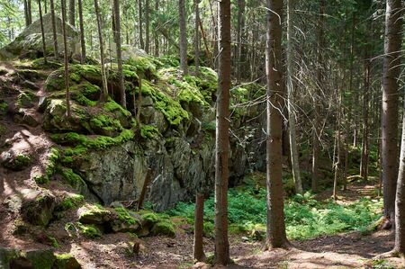 wilderness landscape forest with rocks, fir trees and moss.