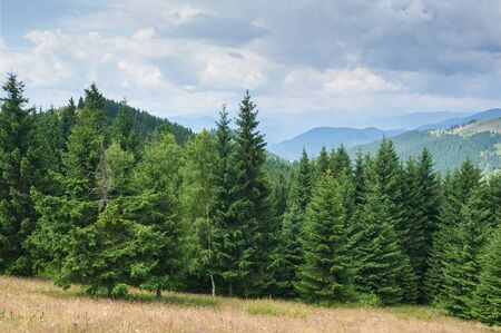 Mountain landscape with fir trees in the foreground. Sunny day. Carpathians, Ukraine. Stock fotó