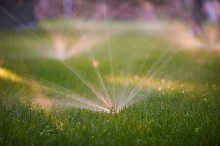 Lawn sprinkler spaying water over green grass. Morning time Stock fotó