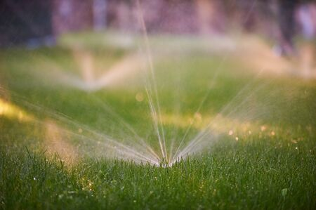 Lawn sprinkler spaying water over green grass. Morning time