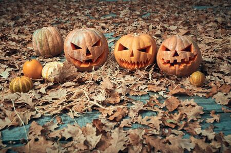 Family of Halloween Pumpkins in the autumn park.
