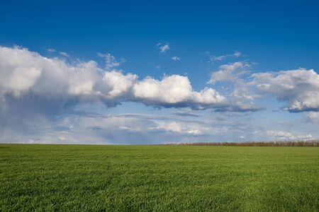 Green meadow and blue sky with clouds at sunset. Reklamní fotografie