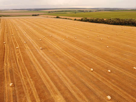 Aerial top down view crop wheat rolls of straw in field