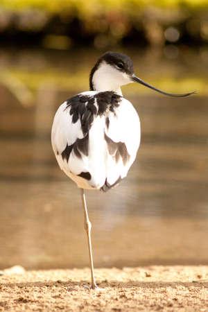 wading bird Stock Photo - 9247753