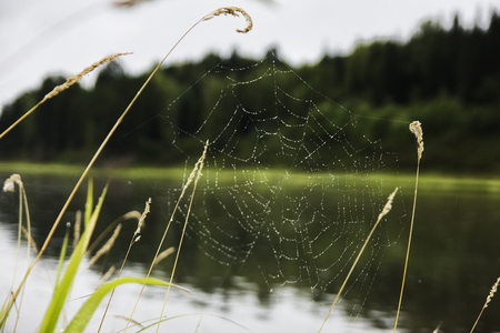 Cobweb on a stalk of grass on river background