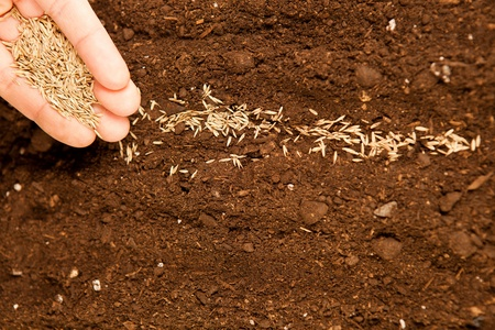 sowing: Close up of male hand sowing seeds on fertile soil Stock Photo