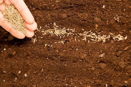 siembra: Primer plano de mano masculinos semillas de siembra en tierra f�rtil