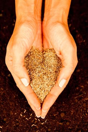 siembra: Womans llena de semillas en forma de corazón manos