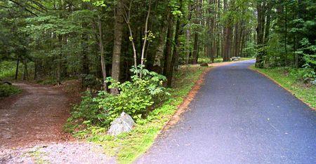 woodland path: Road Split