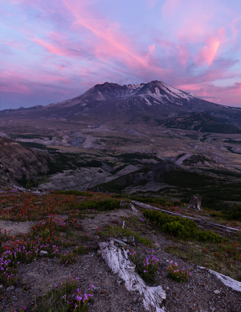 Portrait of Mount Saint Helens Sunset with Wildflowers
