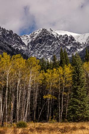 Aspen in Autumn along Bow Valley Parkway, Banff, Alberta, Canada