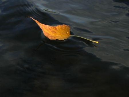 dullness: Yellow autumn leaf on the water surface, driven by the wind.