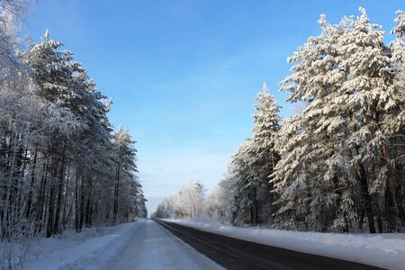 Winter landscape. The route passes through forest, clear frosty winter day. photo
