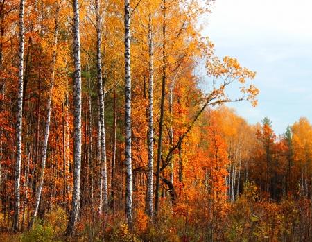 Landschaft im Herbst Wald hellen sonnigen Tag.