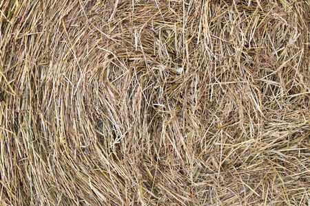 haymow: Hay, twisted in a haystack, as the background Stock Photo