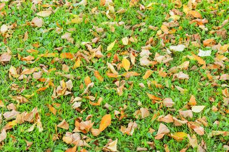 hojas secas: Seca las hojas de otoño sobre la hierba verde