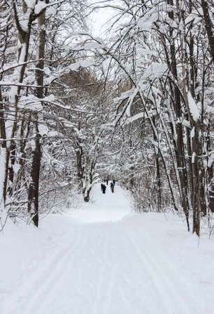 ski walking: Ski walking paths in the winter snowy forest Stock Photo